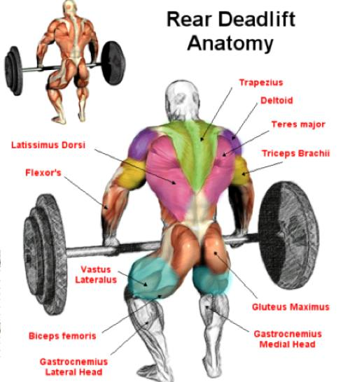 rear_deadlift