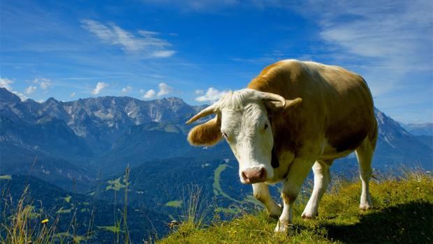 Αλλεργία στο Γάλα της Αγελάδας