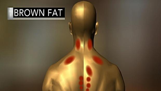 Πώς το λίπος προστατεύει από την εμφάνιση διαβήτη