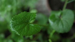 Τα βότανα που βοηθούν τη μνήμη σου